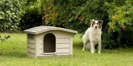 caseta perro barata